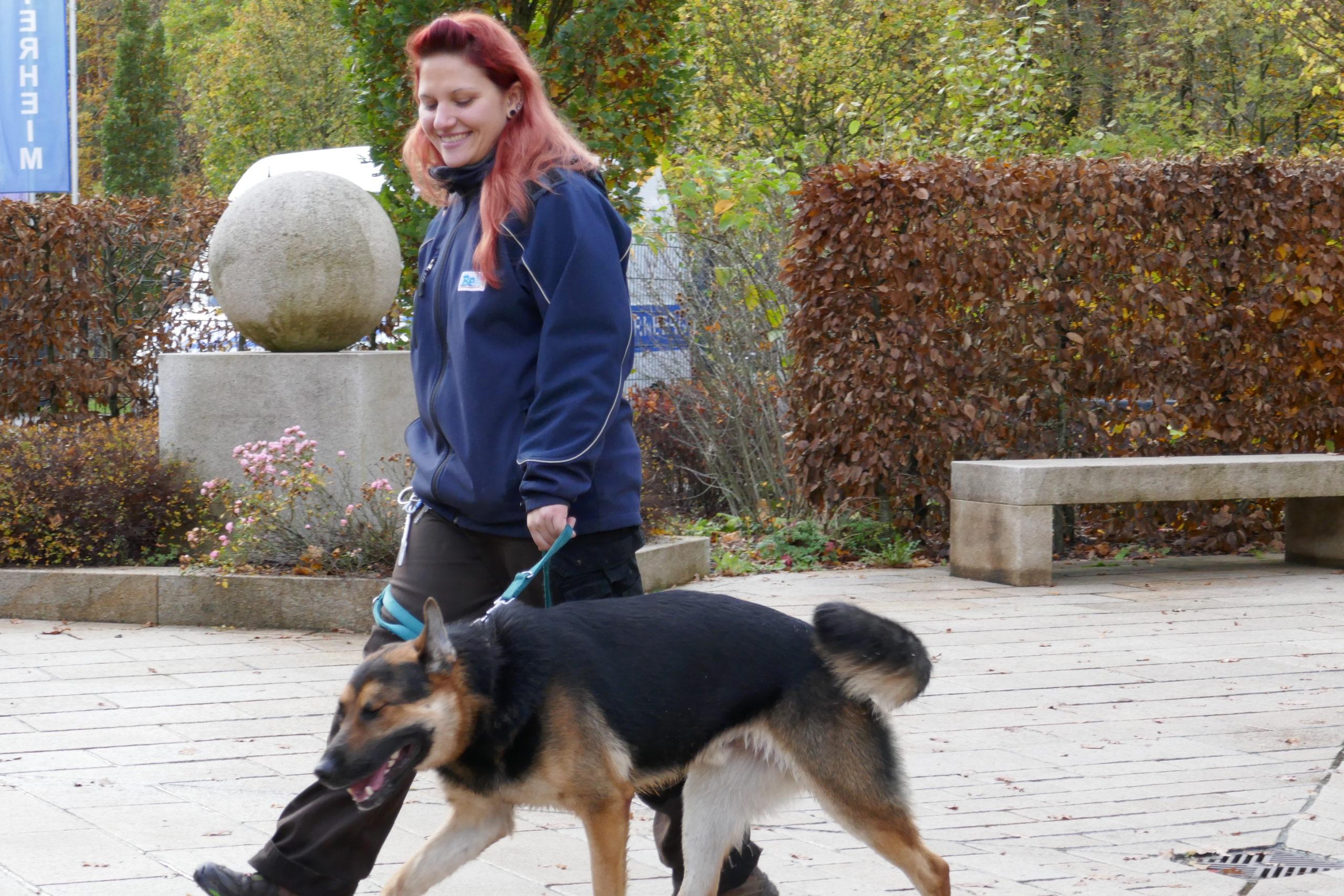 Tierheim Nürnberg Hunde